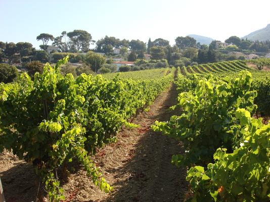 Cassis Demi Journee Rendez Vous Dans Les Vignes