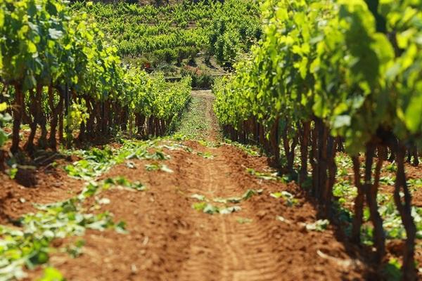 Cassis ... sur la route des vins