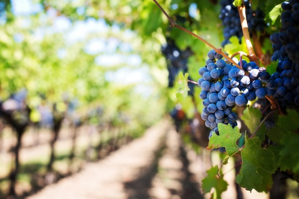 Les fins connaisseurs de vin à Cassis