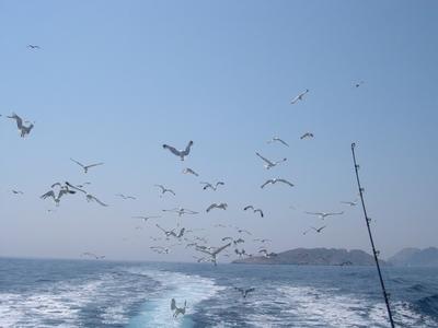 Activité Pêche Promenade Calanques - Cassis, France