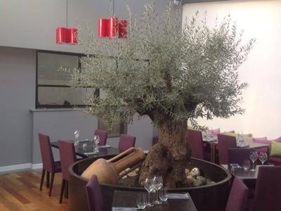 Restaurant Angelina - Cassis, France