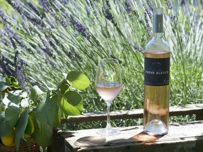 Domaine de la Ferme Blanche Wines - Cassis, France