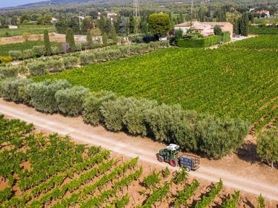 Domaine du Paternel Vins - Cassis, France