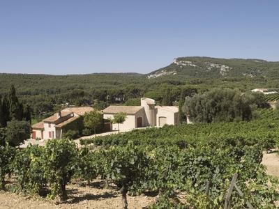 Domaine du Paternel : Önologische Weinprobe und Präsentation des Weinguts - Cassis, Frankreich